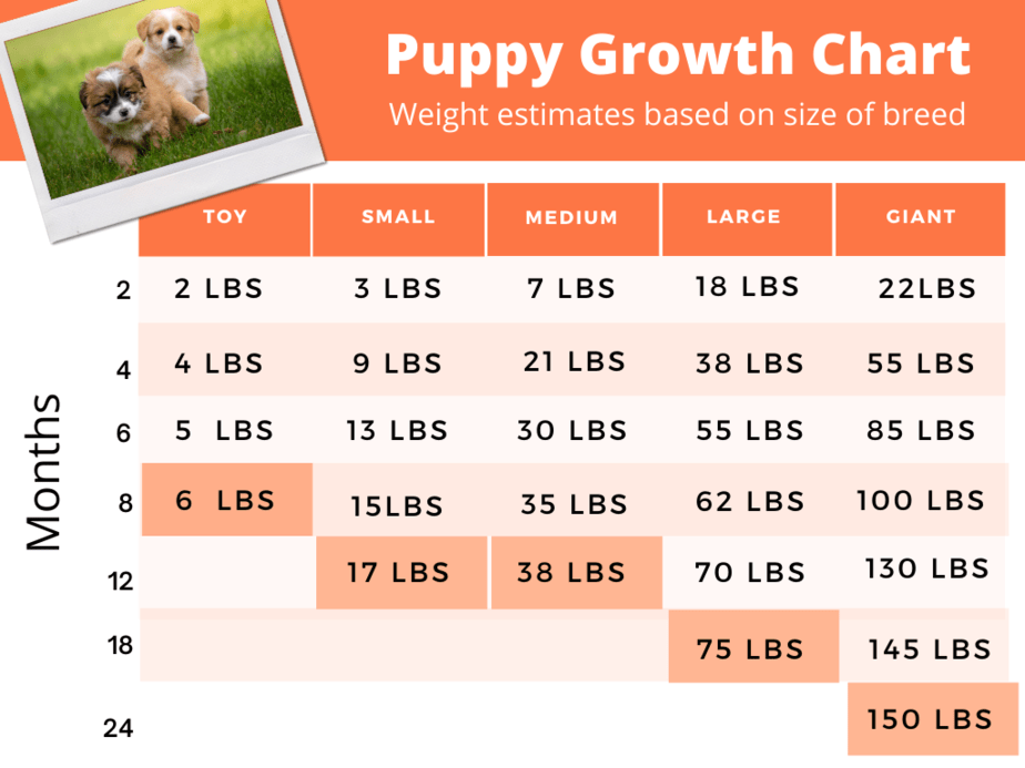 Market size depends upon demand and price during an evaluation period and is typically expressed as dollars per year. When Puppies Grow The Most Charts And Growth Rates Houndgames