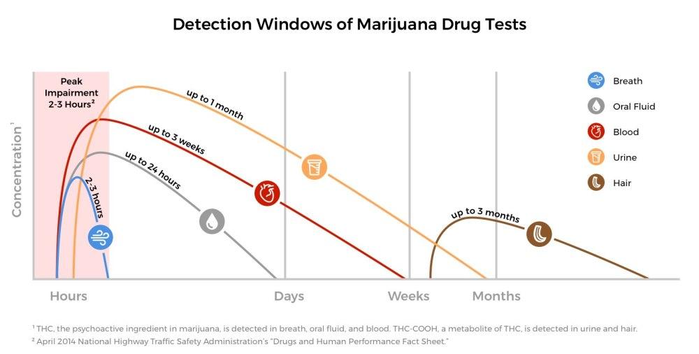 medium resolution of graph of detection windows for various marijuana drug tests