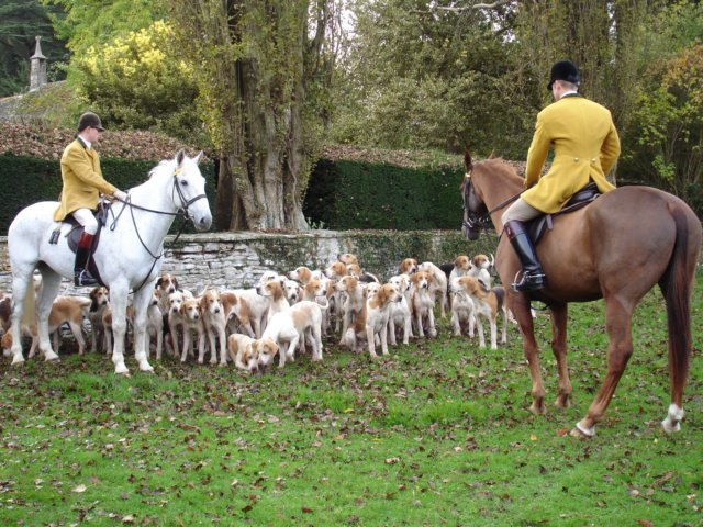 The Berkeley Hunt, one of England's most renowned packs. The Masters and hunt staff wear yellow coats with green collars, which represent the indoor and outdoor liveries of the Berkeley family.