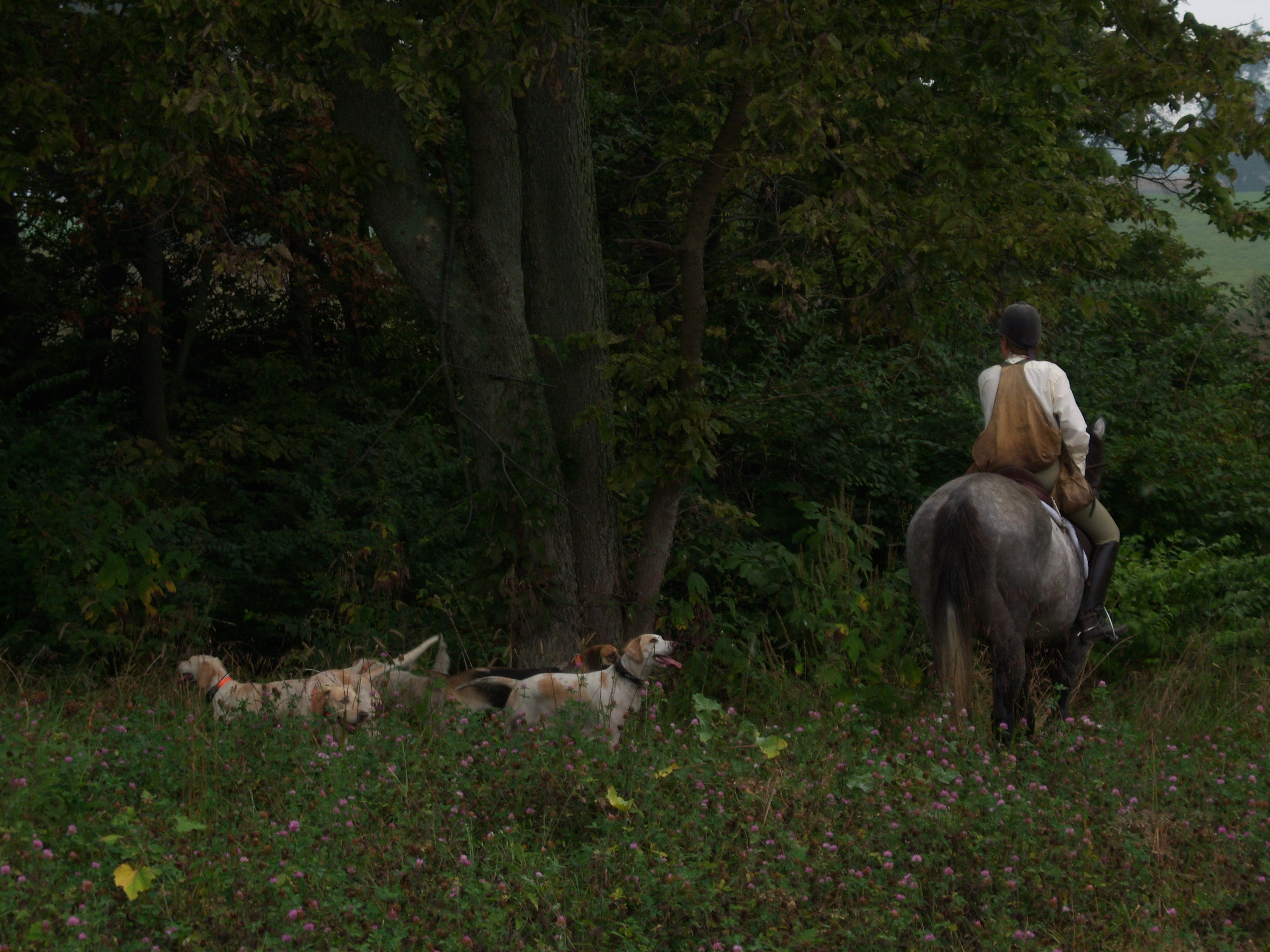 Tall grass, a suicidal raccoon, and a cooling line provided excellent lessons for the hounds