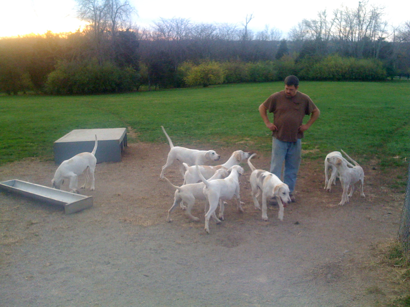 Baffle's puppies in exercise field
