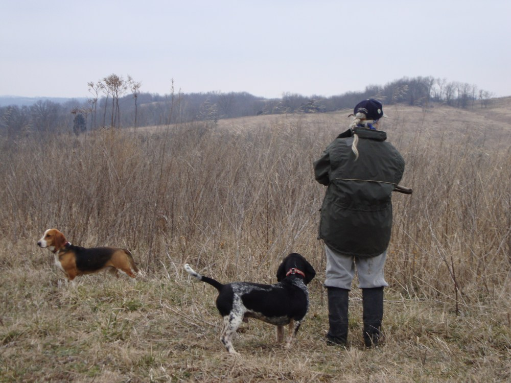 Beagles, bassets, and dozens of running bunnies (with two videos!) (2/4)