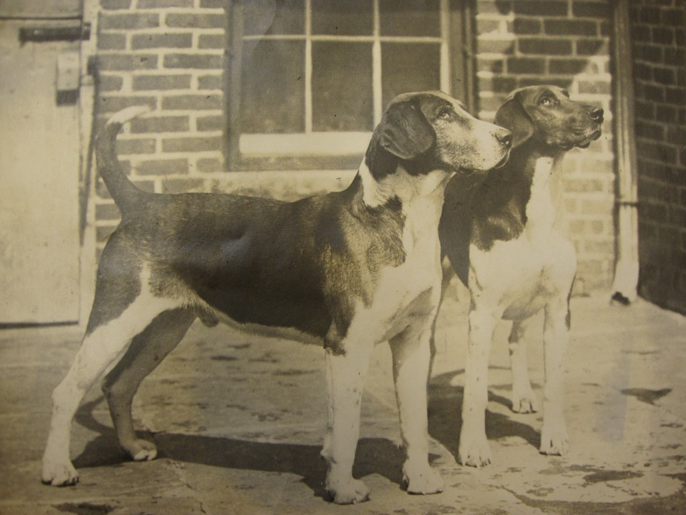 The Great Hound Match of 1905-Part 2 (6/6)