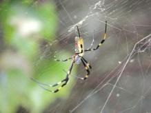Nasty spider by my work.