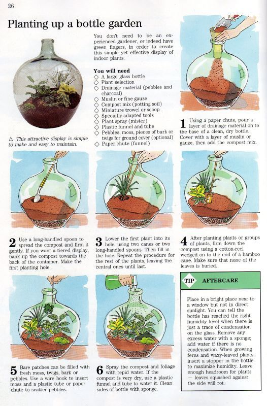 Self Sustaining Terrarium