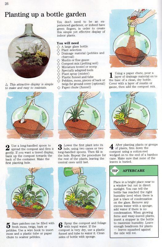 Self Sustaining Terrarium