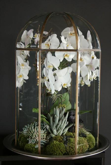 Orquídea de terrario