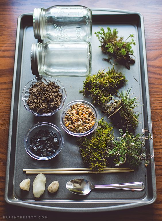 Terrarium Supplies