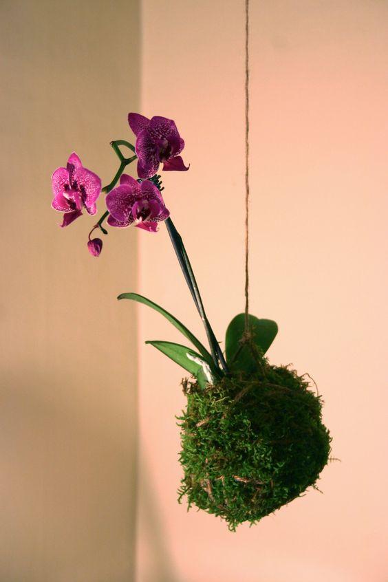 string kokedama orchid