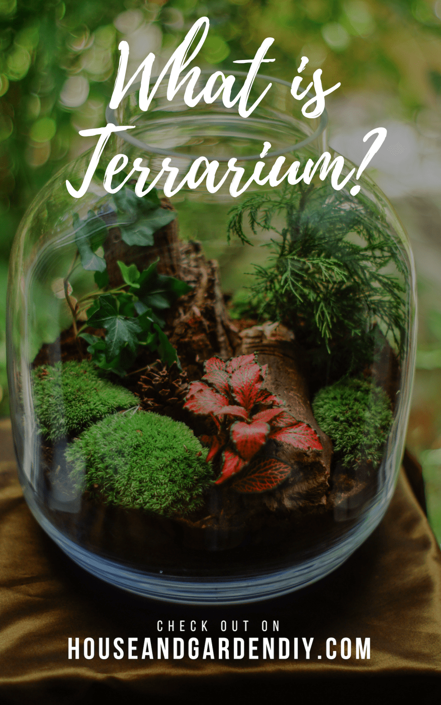 what is terrarium?