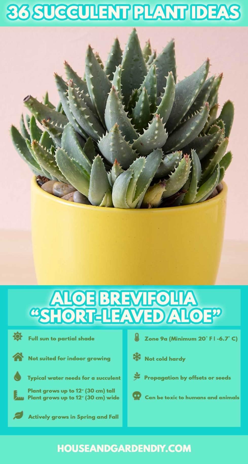 best planters for succulents