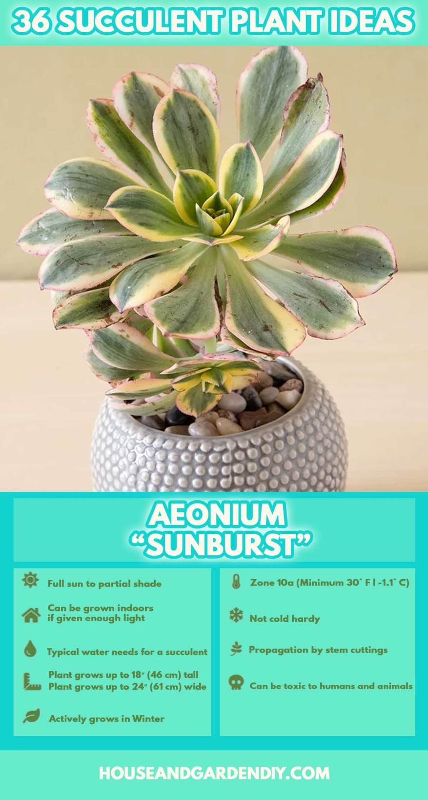 diy ideas for planting succulents