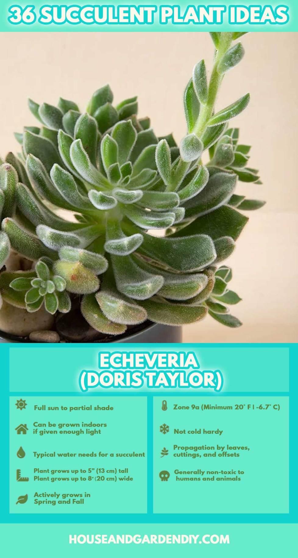 indoor succulent care