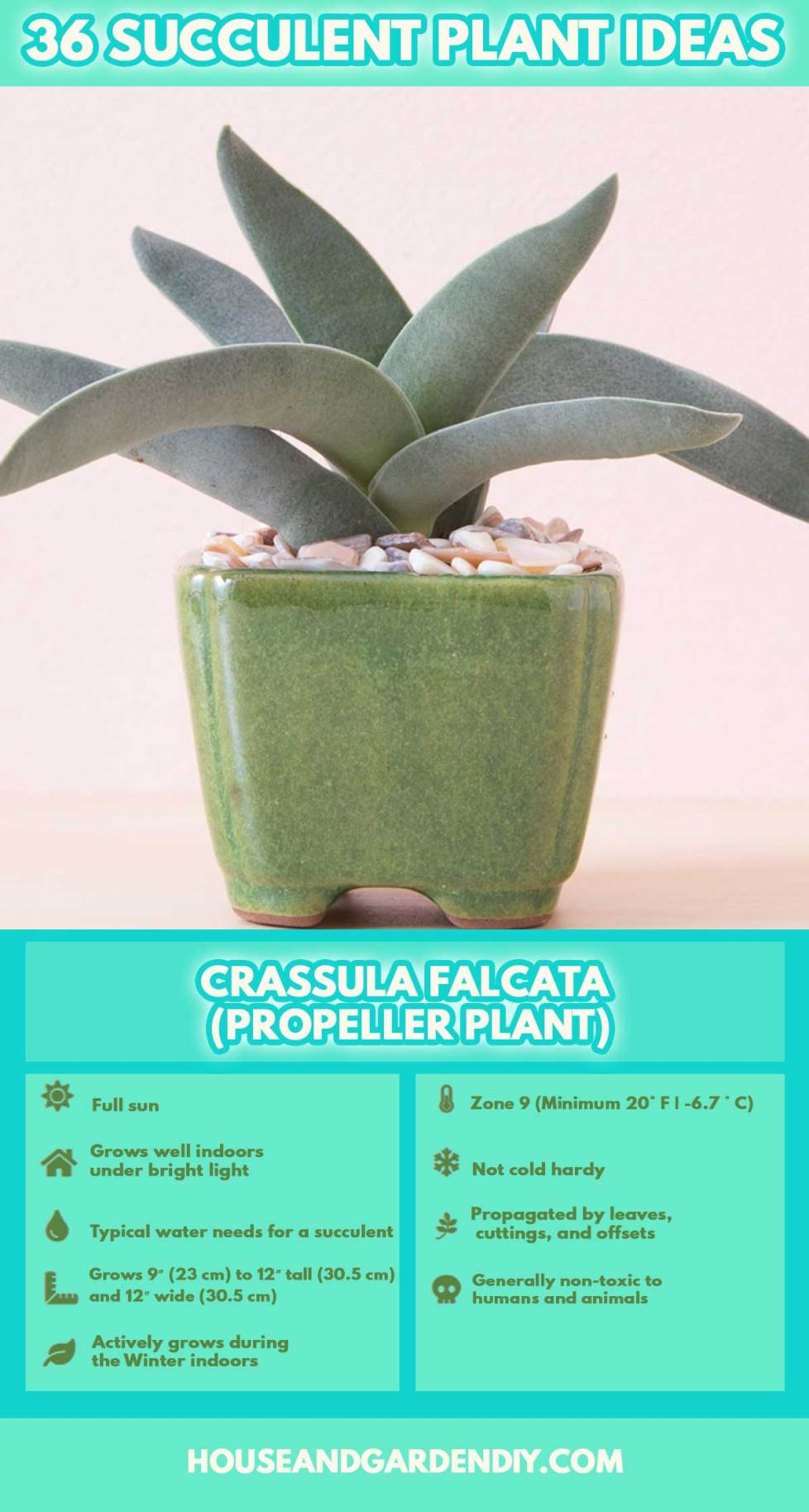 care of succulent plants indoors