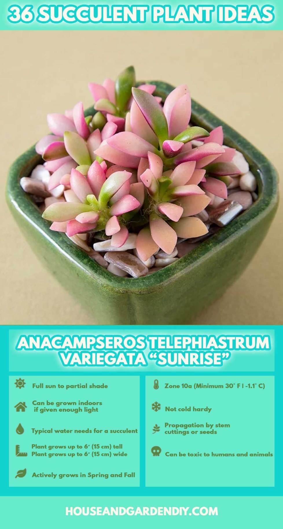 succulent plant identification guide