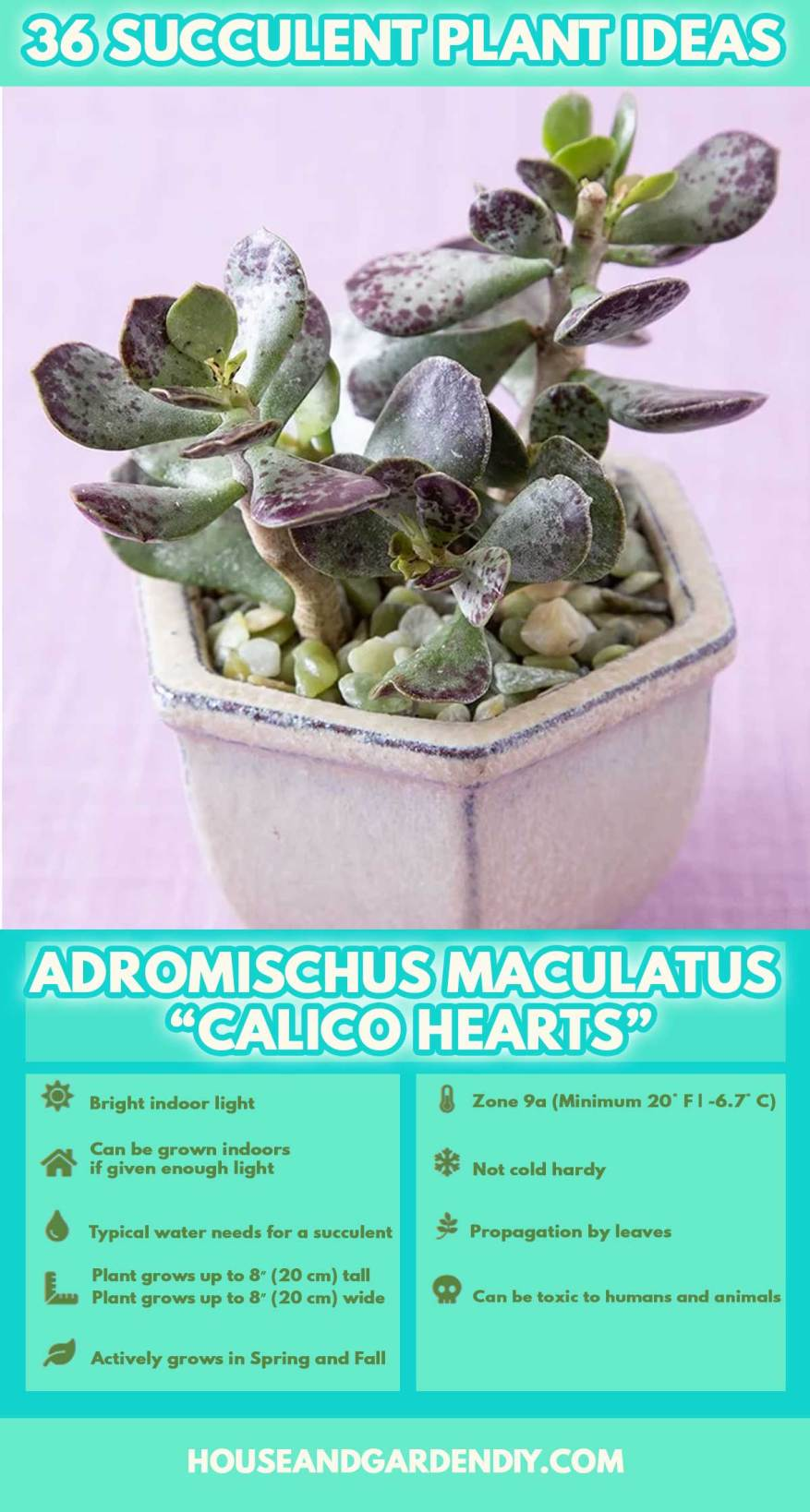 succulents identification and care