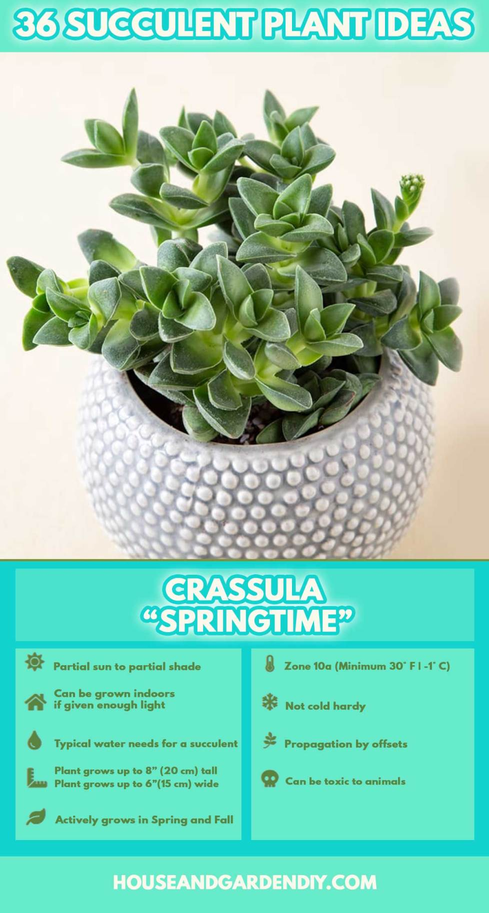 types of succulent plants pictures