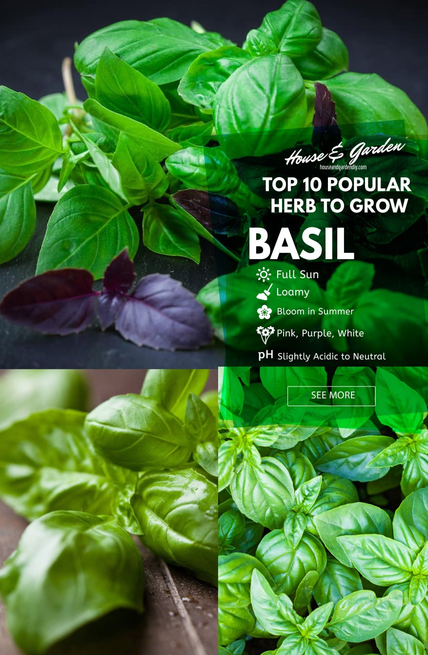 Basil balcony herb garden designs & containers