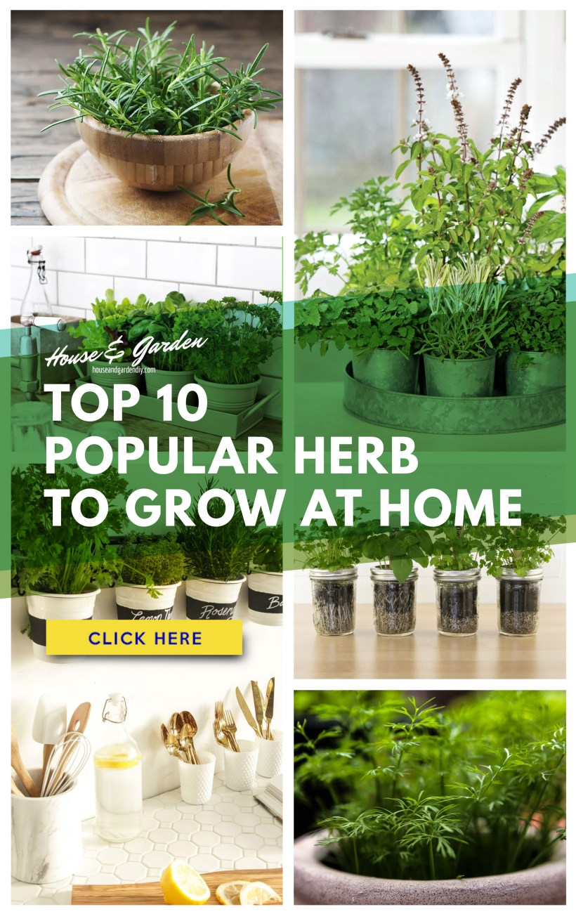 10 Easiest Herbs to Grow at Home