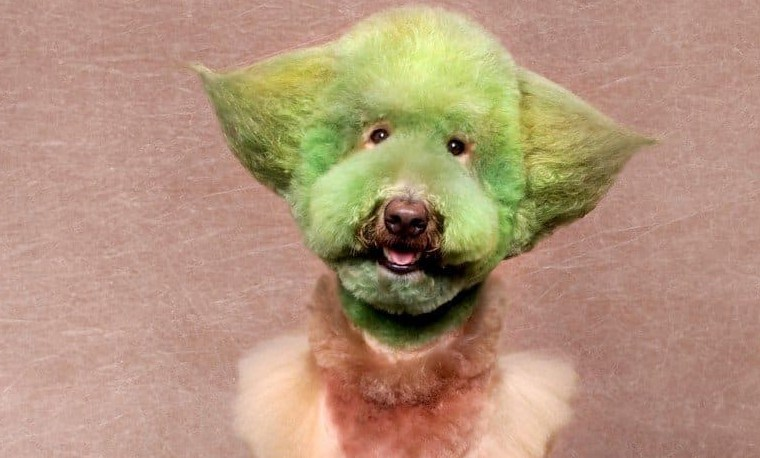 """32 Pet Grooming Fails That Made Us Ask """"What Were You Thinking"""""""