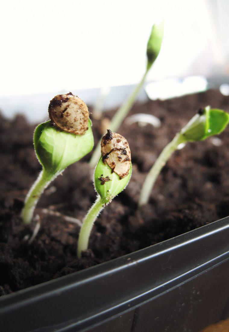 5 Reasons You Should Start Indoor Gardening