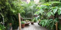 10 Tropical Plants You Can Grow In The UK - Garden Ideas