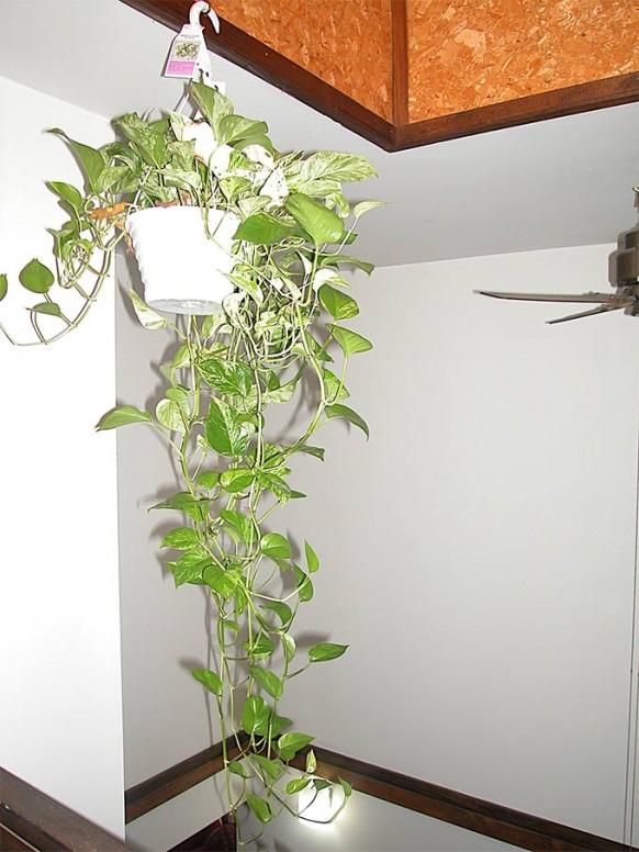 Indoor Hanging Pot Plants