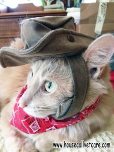 cowboyjo