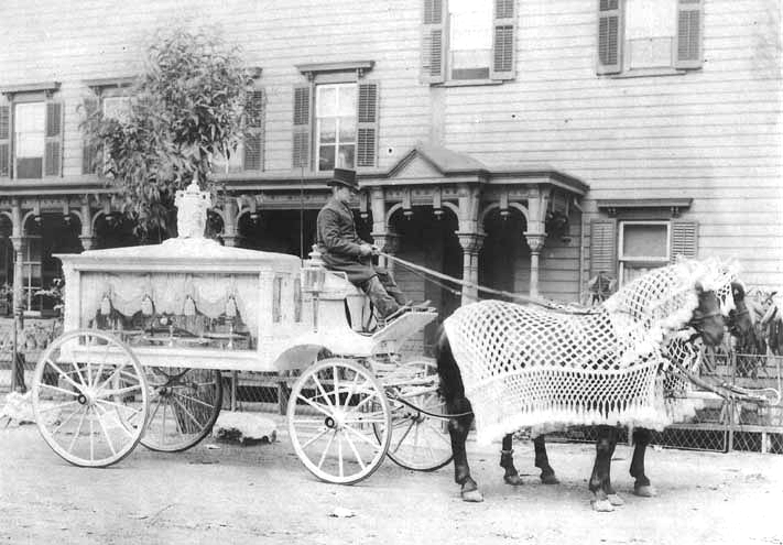 antique white horse drawn hearse
