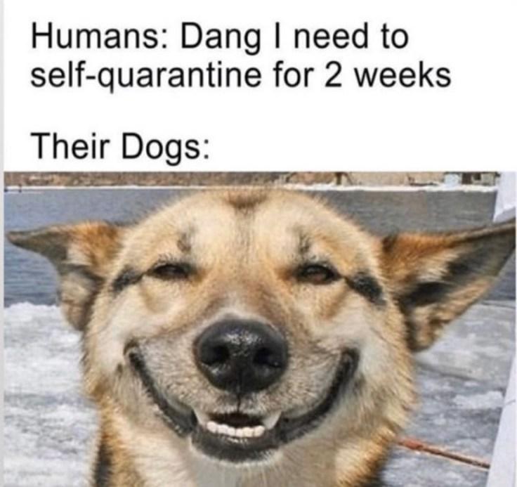 funny coronavirus memes