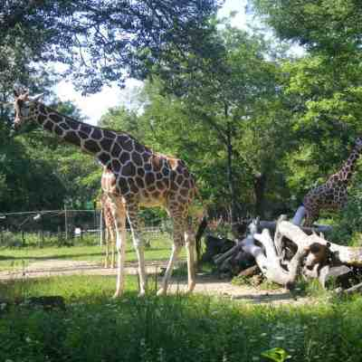 Chicago Sights: Brookfield Zoo