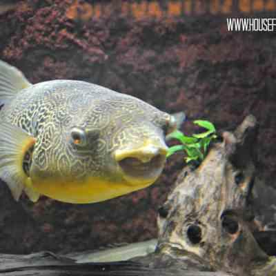 Chicago Sights: John G. Shedd Aquarium