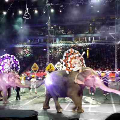 Ringling Brothers Barnum & Bailey Circus: Built To Amaze Tour