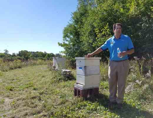 Feed a Bee Experience at Cantigny Golf