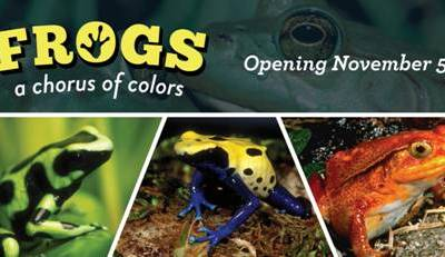 Chicago Sights | Frogs: A Chorus of Colors