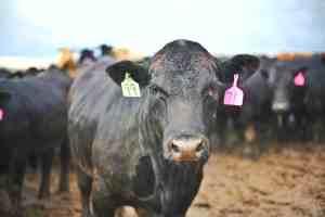 Finishing Farm Tour in Omaha Nebraska