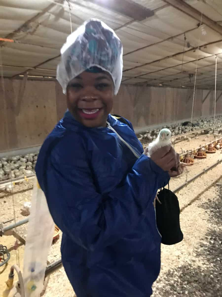 Natasha Nicholes from Houseful Of Nicholes holding a 15 day old broiler chicken #chickencheckin #ad
