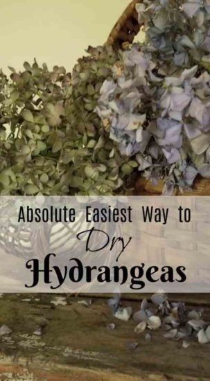 Homestead Blog Hop Feature - How-to-Dry-Hydrangeas