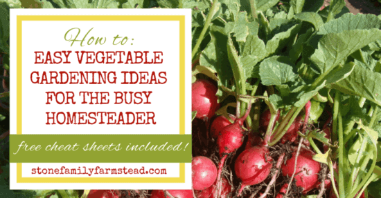 Homestead Blog Hop Feature - How-to_-Easy-Vegetable-Gardening-Ideas-for-the-Busy-Homesteader