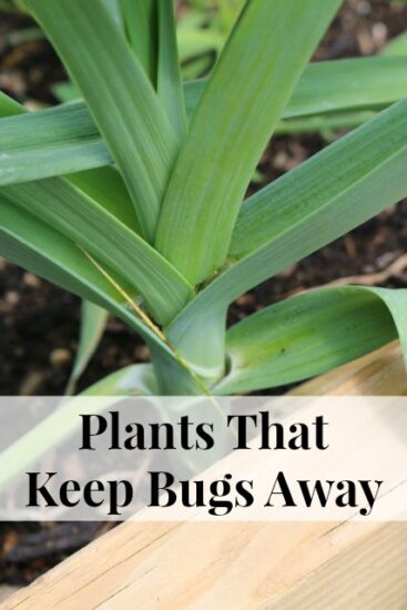 Homestead Blog Hop Feature - Plants-That-Keep-Bugs-Away