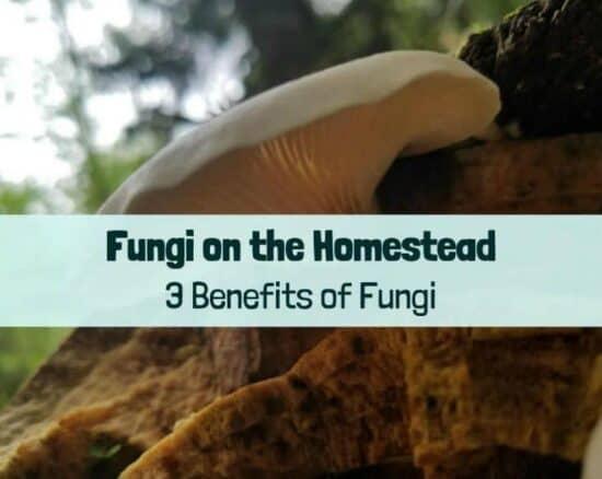 Homestead Blog Hop Feature - benefits-of-fungi