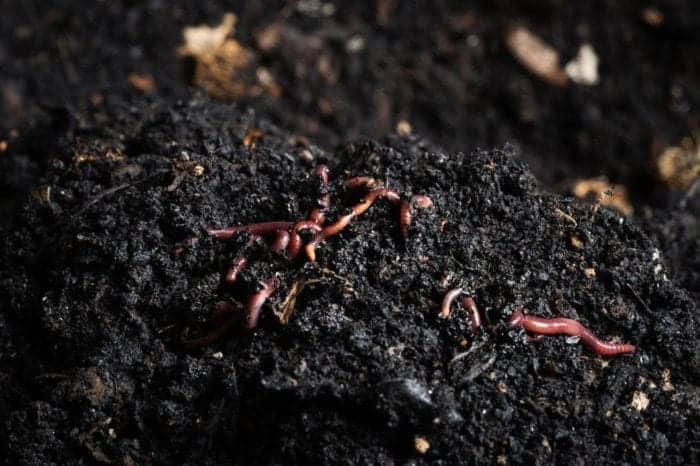 Homestead Blog Hop Feature worms-in-soil