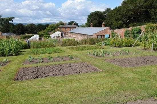 Homestead Blog Hop Feature - Organic4 Green Livings