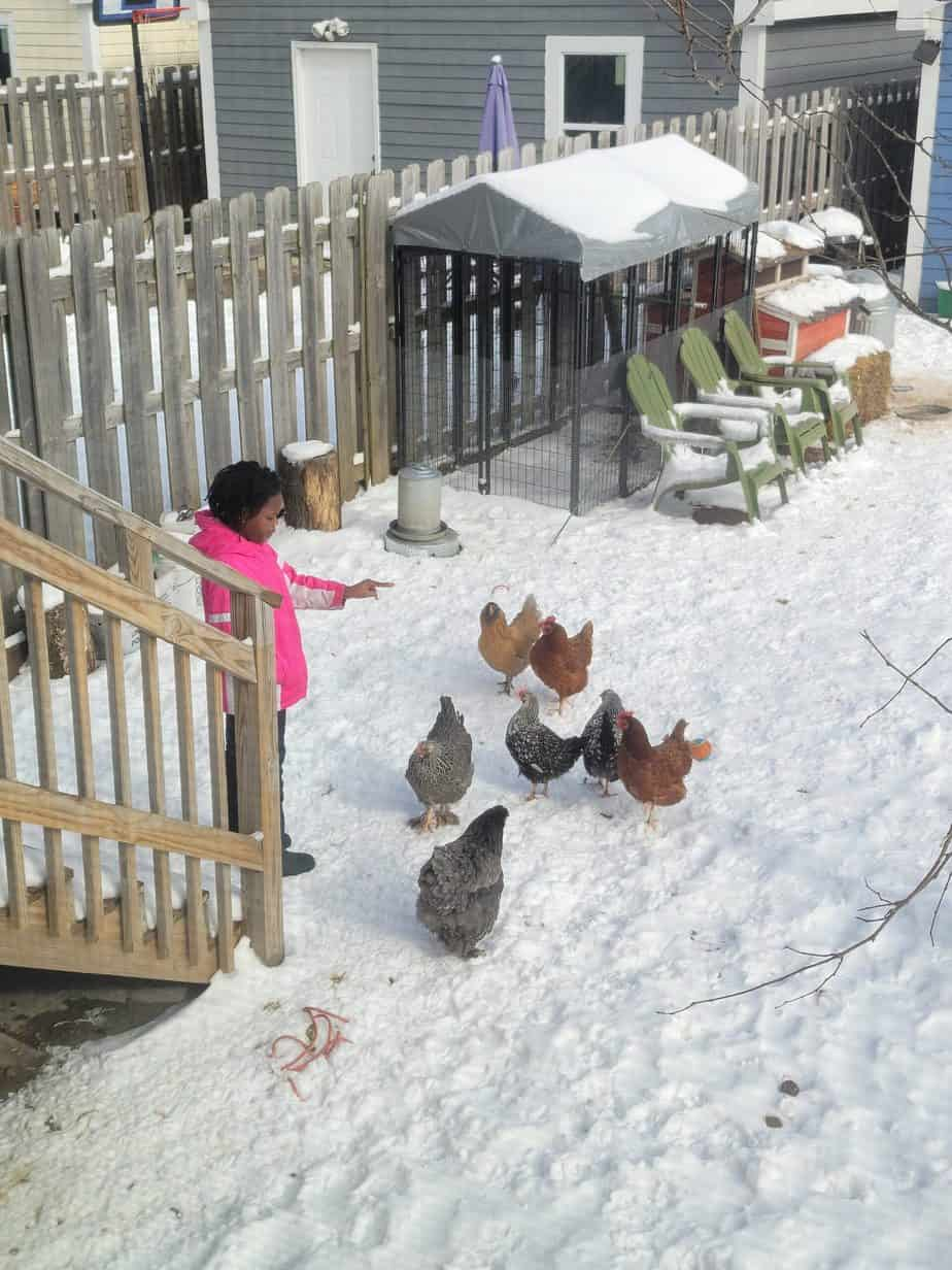 10 Mistakes to Avoid When Choosing A Chicken Coop Location