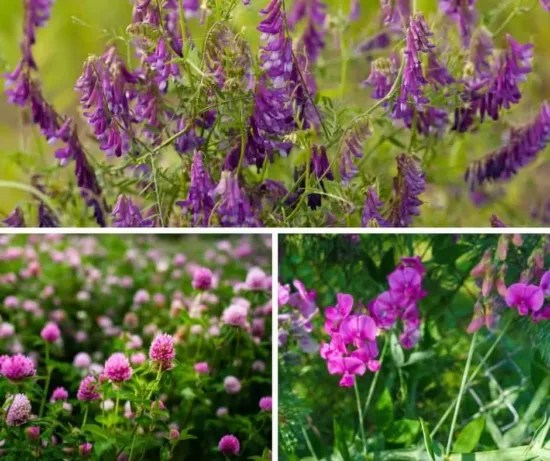 Hoemstead Blog Hop Feature - How to use a cover crop in your permaculture garden