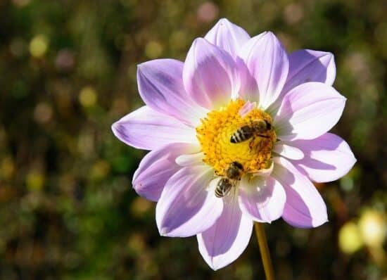Homestead Blog Hop Feature - Plants for Beneficial Insects