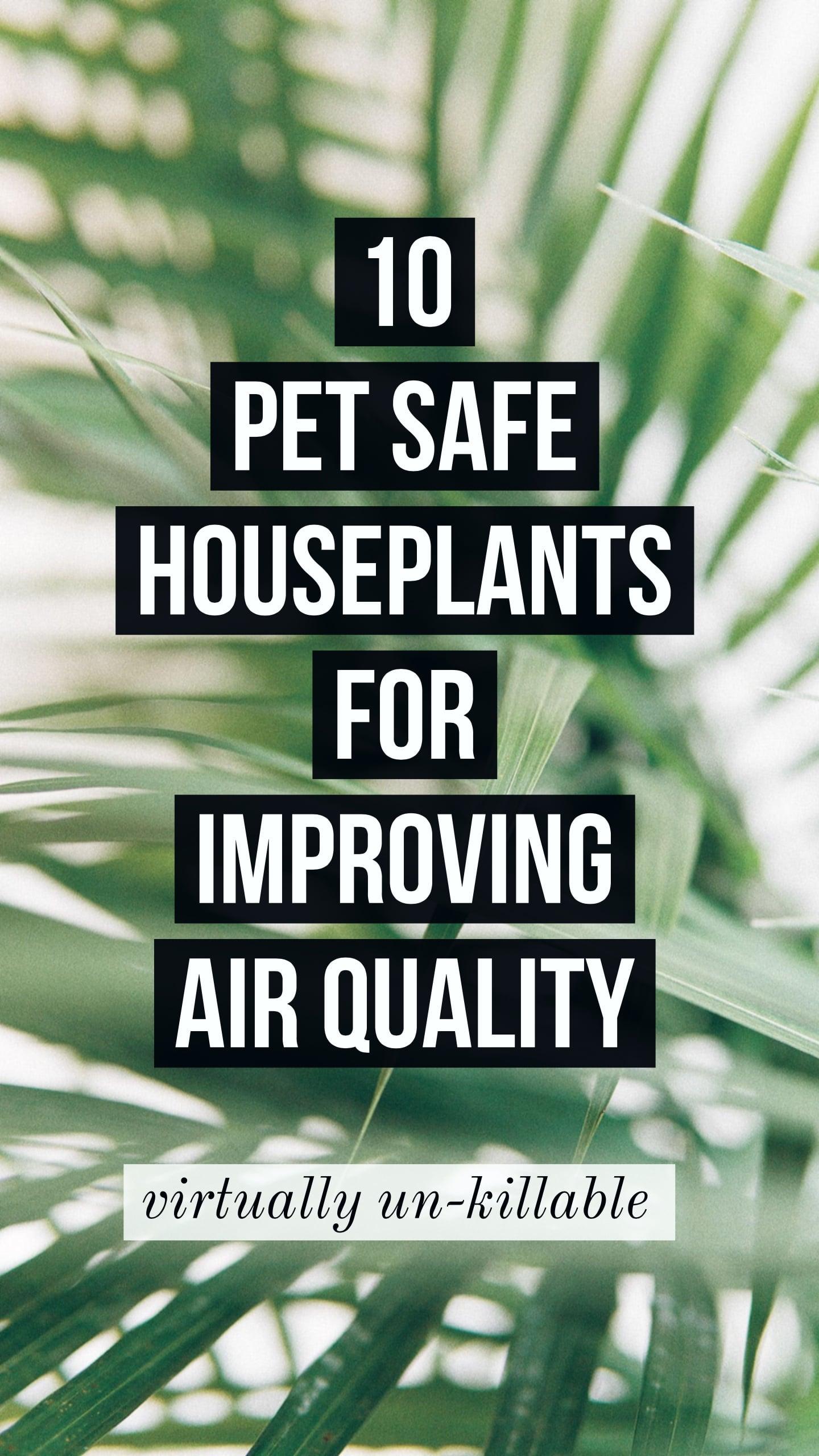 pet safe air purifying houseplants