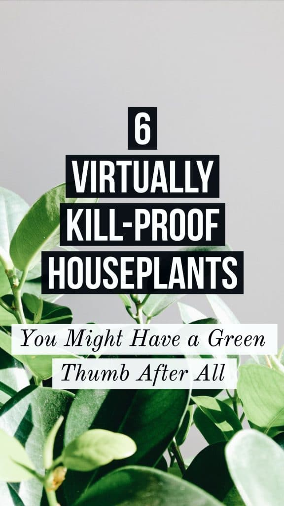 easy to care for houseplants