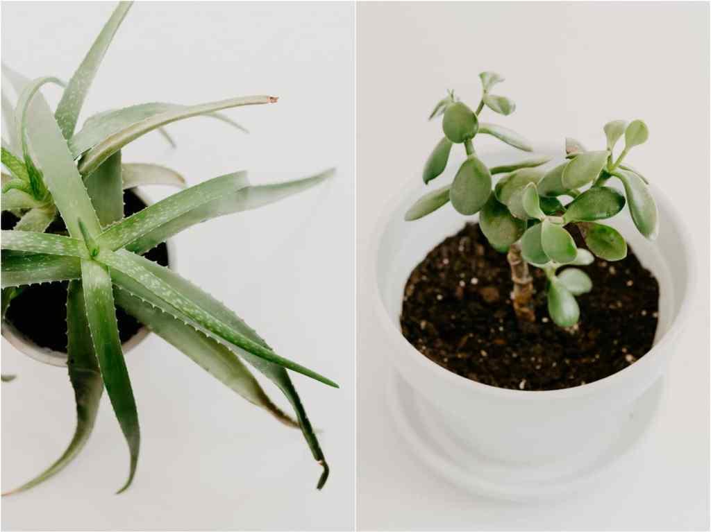 easiest care houseplants