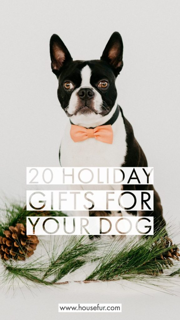 20 best holiday gifts for your dog